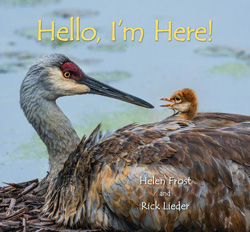 Cover of the book Hello, I'm Here! by Helen Frost and Rick Lieder.